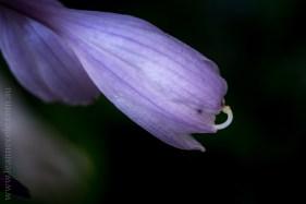 mifgs-flower-macro-tamron-melbourne-7078