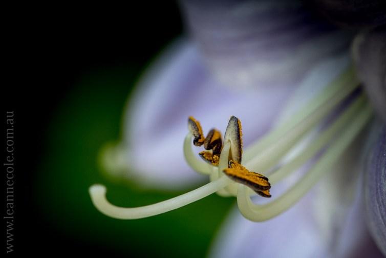 mifgs-flower-macro-tamron-melbourne-7081