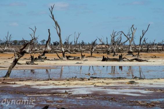 salt-pans-nyahwest-dead-trees-2841