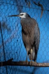 serendip-sanctuary-birds-victoria-geelong-5707
