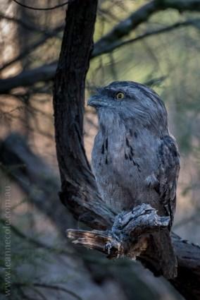 serendip-sanctuary-birds-victoria-geelong-5803