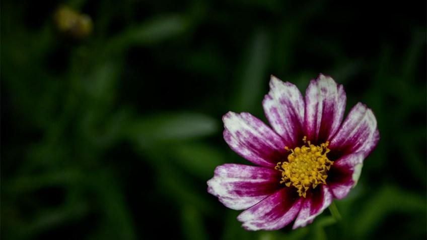 flower-garden-show-mifgs