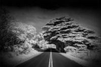 road-tasmania-infrared-pine-tree