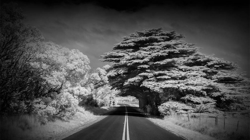 road-tasmania-infrared-pine-tree