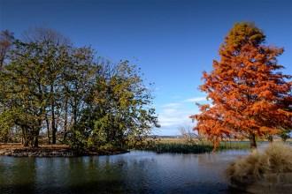 ballarat-autumn-colour-fujifilm