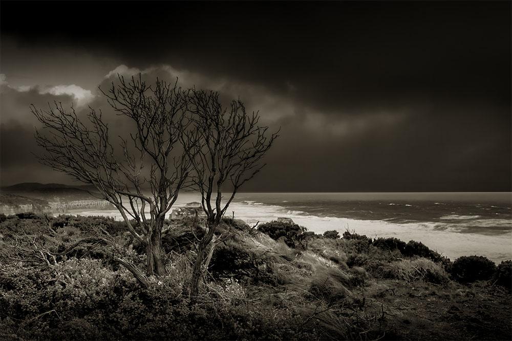 12-apostles-tree-cliff-monochrome-australia