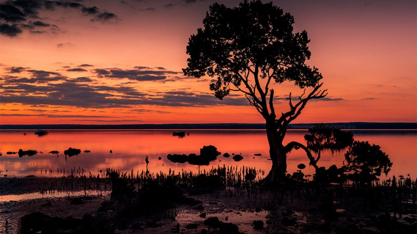 point-tendy-sunset-longexposure-tree