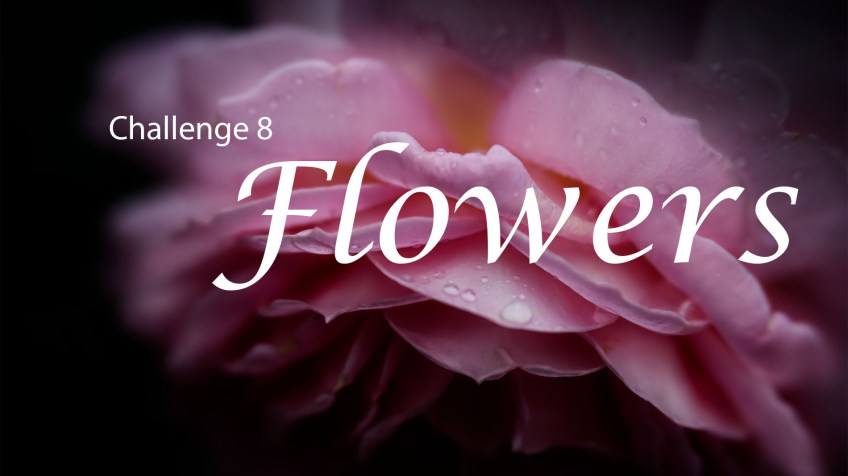 header-afp-facebook-flowers