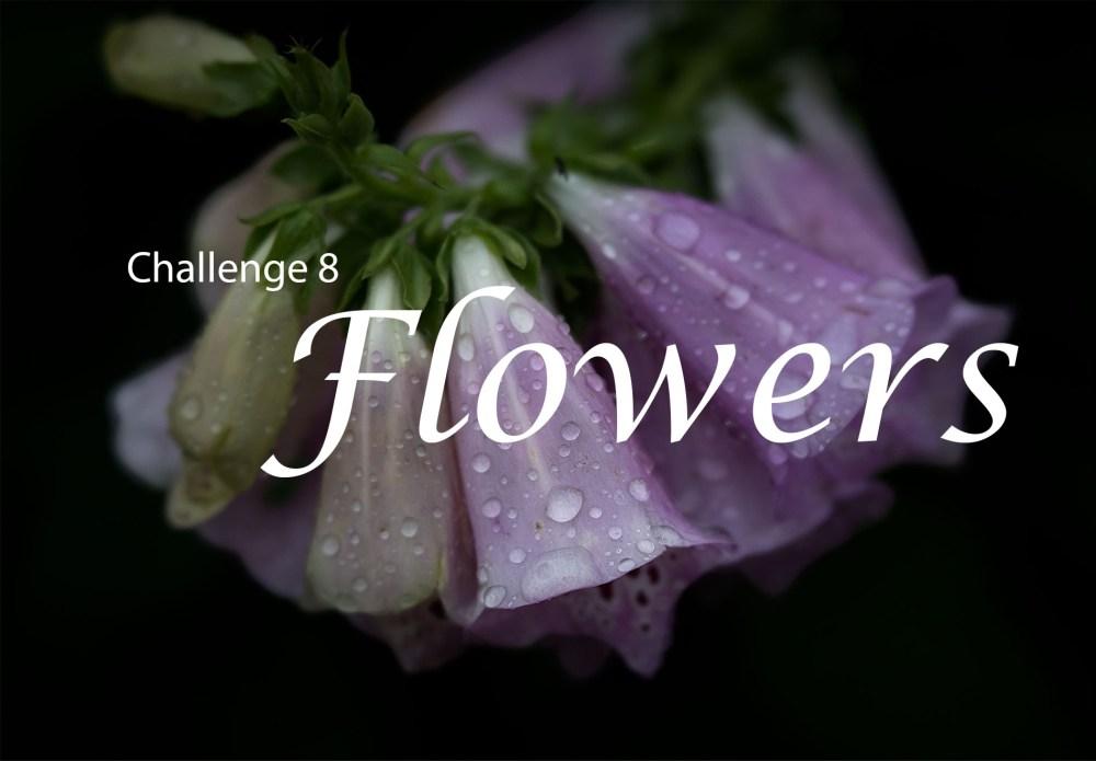 header-lcp-facebook-flowers
