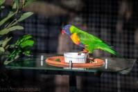moonlit-sanctuary-birds-animals-wild-3673