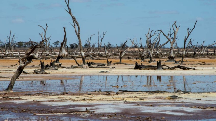 salt-pans-nyahwest-dead-trees-2841