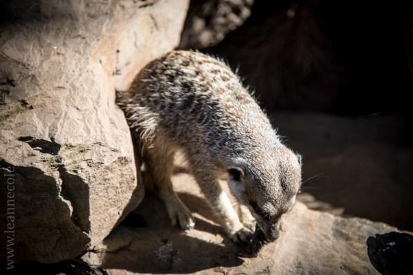 zoo-animals-plants-sunny-day-5095
