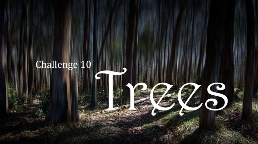 header-afp-facebook-trees