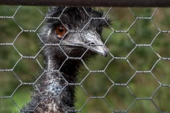 healesville-sanctuary-animals-birds-1031