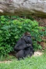 melbourne-zoo-animals-0528