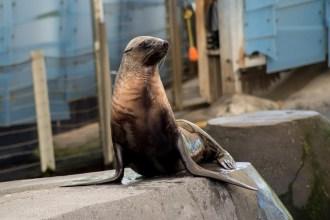 melbourne-zoo-seal-show-tarwin-0175