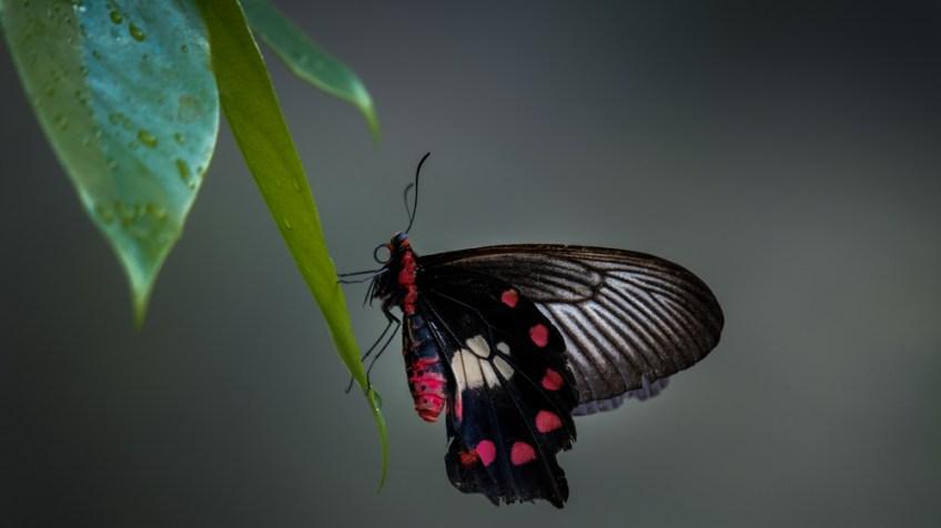 melbourne-zoo-butterflies-fujifilm-xt20-2265