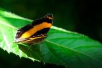 melbourne-zoo-butterflies-fujifilm-xt20-2310