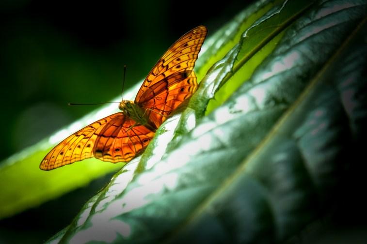 melbourne-zoo-butterflies-fujifilm-xt20-2349