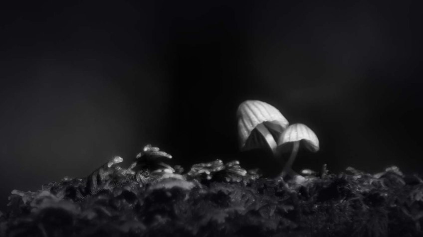 apollo-bay-funghi-rainforest-monochrome