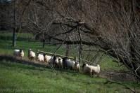 eildon-lake-water-country-farms-8