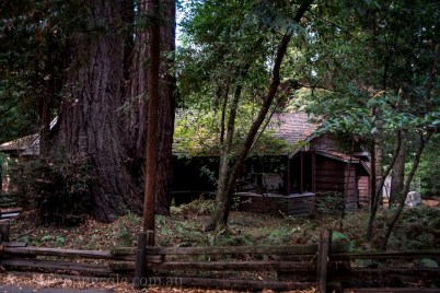 henry-cowell-redwoods-santacruz-mountains-4465