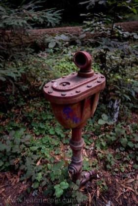 henry-cowell-redwoods-santacruz-mountains-4504