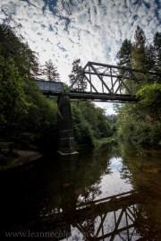 henry-cowell-redwoods-santacruz-mountains-4520