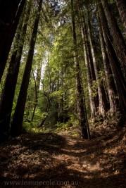 henry-cowell-redwoods-santacruz-mountains-4523