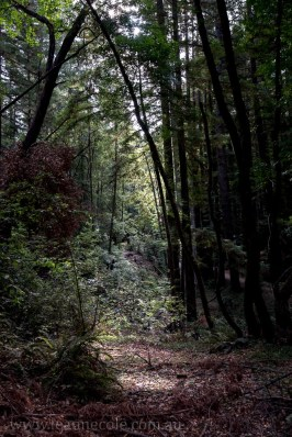 henry-cowell-redwoods-santacruz-mountains-4551