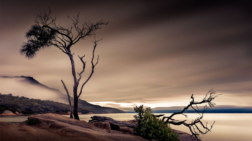 honeymoon-bay-tasmania-longexposure-tree