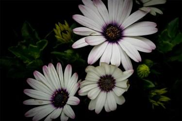 macro-flowers-garden-show-mifgs