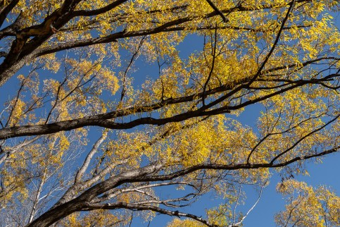 arrowtown-autumn-leaves-historic-newzealand-3076