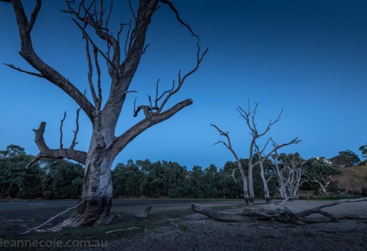 banyule-flats-swamp-dry-autumn-3195