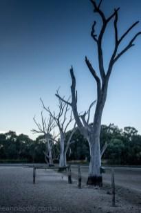 banyule-flats-swamp-dry-autumn-3225