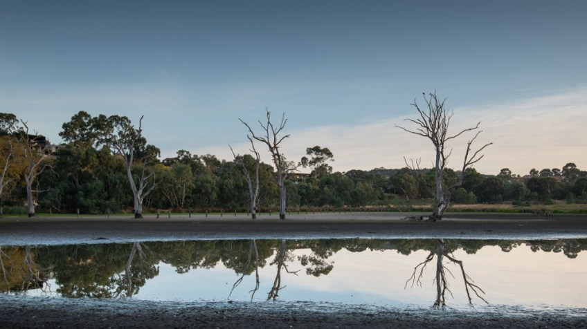 banyule-flats-swamp-dry-autumn-3261