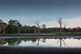 banyule-flats-swamp-dry-autumn-3261