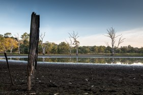 banyule-flats-swamp-dry-autumn-3270