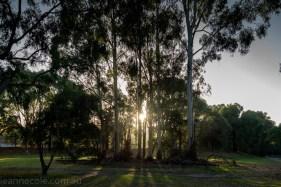banyule-flats-swamp-dry-autumn-3273