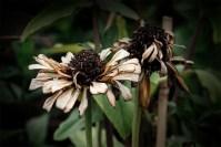 flower-alowyngardens-dead-seasons-1888