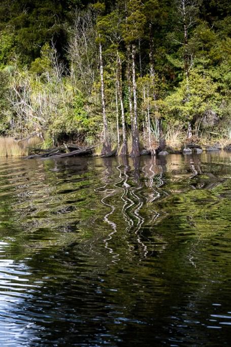 glacierlake-tours-boat-lake-rainforest-9261
