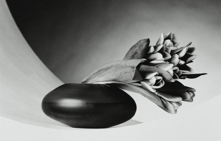 Influencing Me - Robert Mapplethorpe's flowers