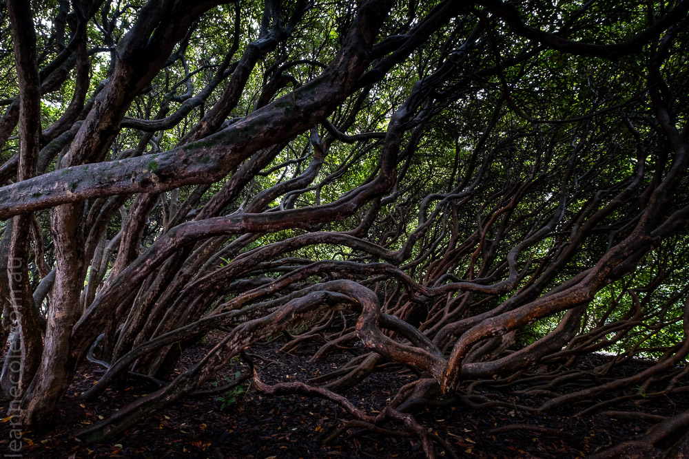 Queens-park-invercargill-autumn-newzealand-0942