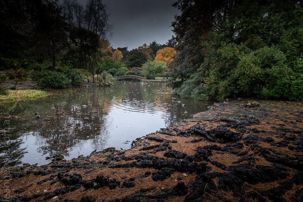 Queens-park-invercargill-autumn-newzealand-0945