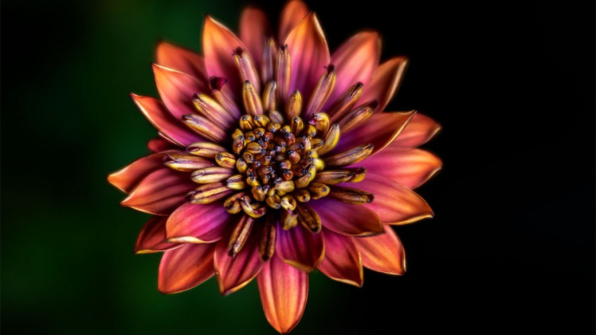 class-macro-alowyn-gardens-flower