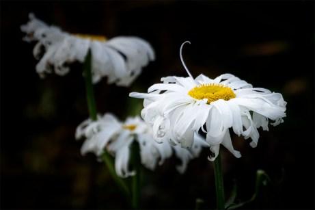 Floral Friday - Dunedin Botanical Gardens