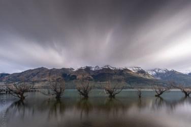 glenorchy-trees water-lake-newzealand-9886