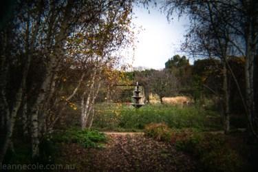 Weekend Wanderings - Alowyn Gardens through the Holga Lens
