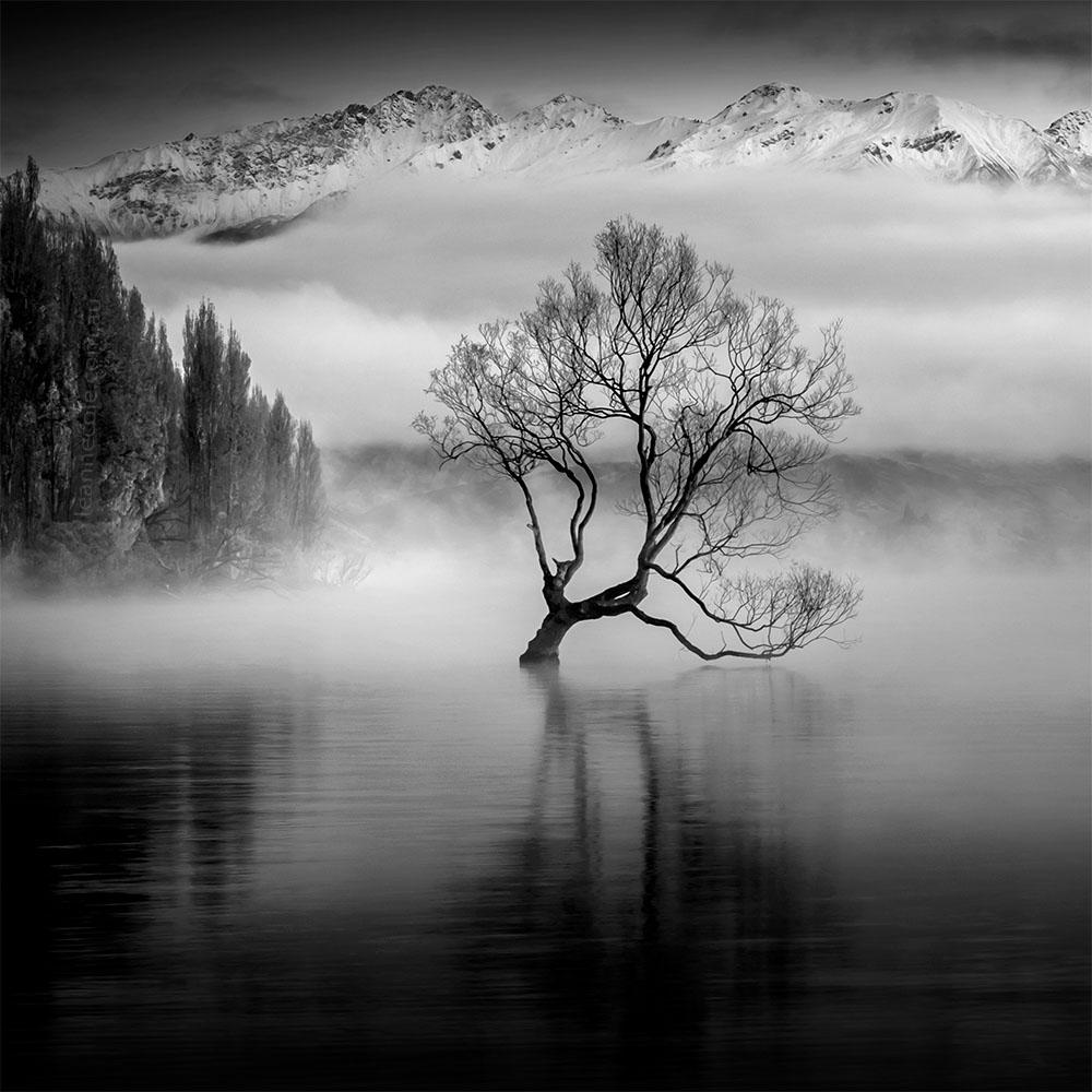 Monochrome Wednesday - That Tree