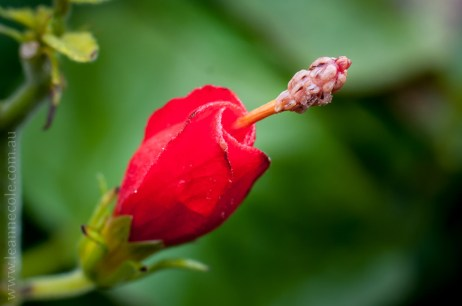 Floral Friday - Mum's garden again